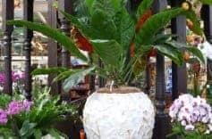 Zimmerppflanzen