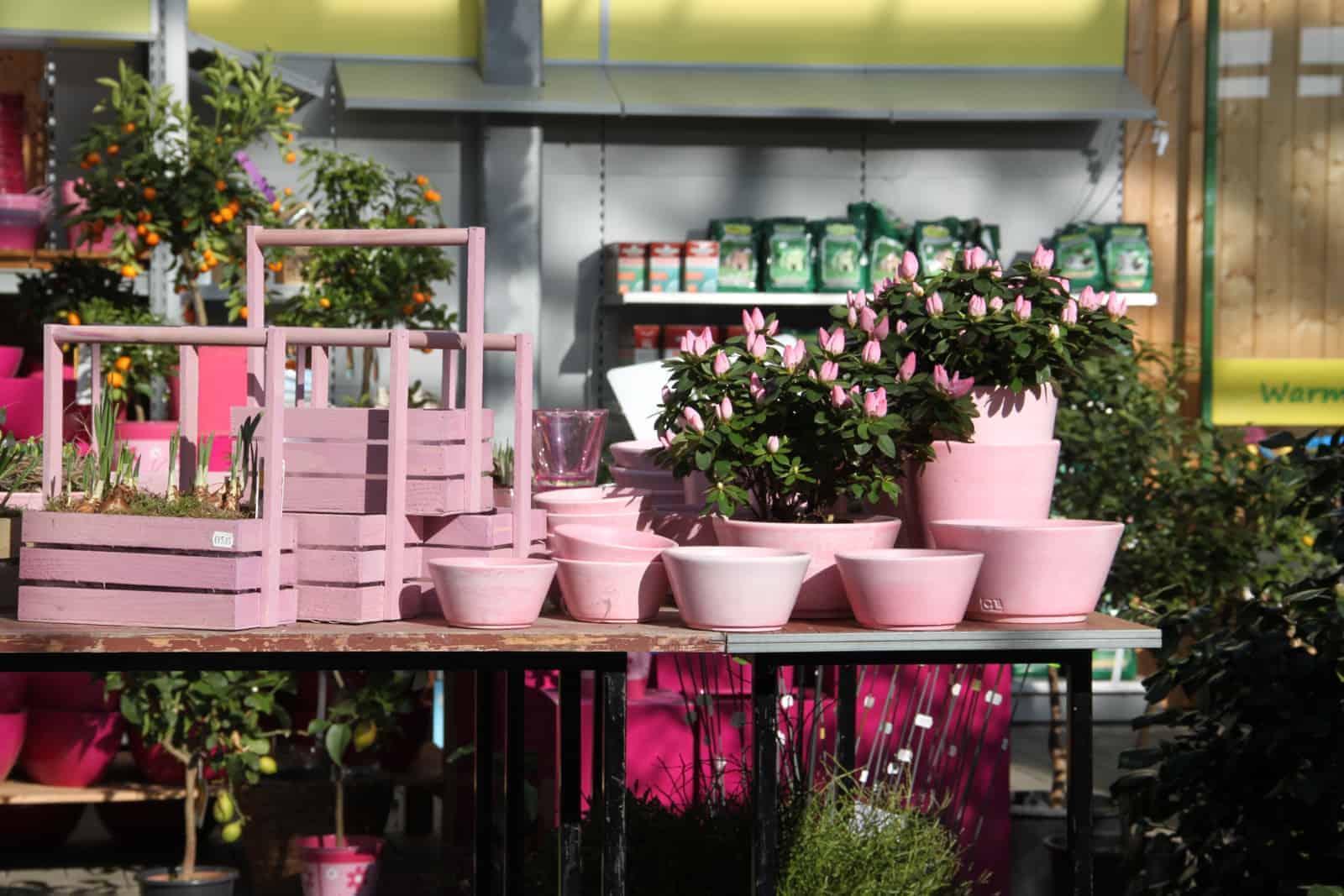 Gartencenter Schmitz toepfe zubehoer große bäume kaufen