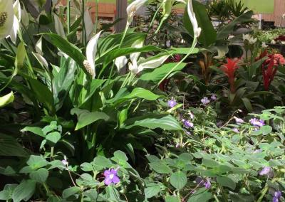 pflanzencenter-schmidt-kaarst-36-1
