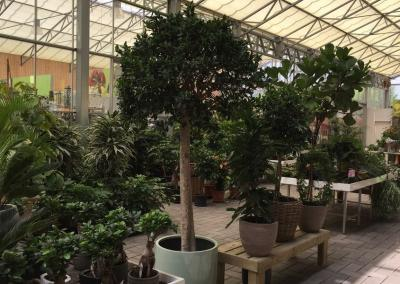 pflanzencenter-schmidt-kaarst-50